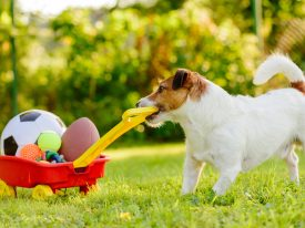 Tips For Starting a Pet Supply Store Online