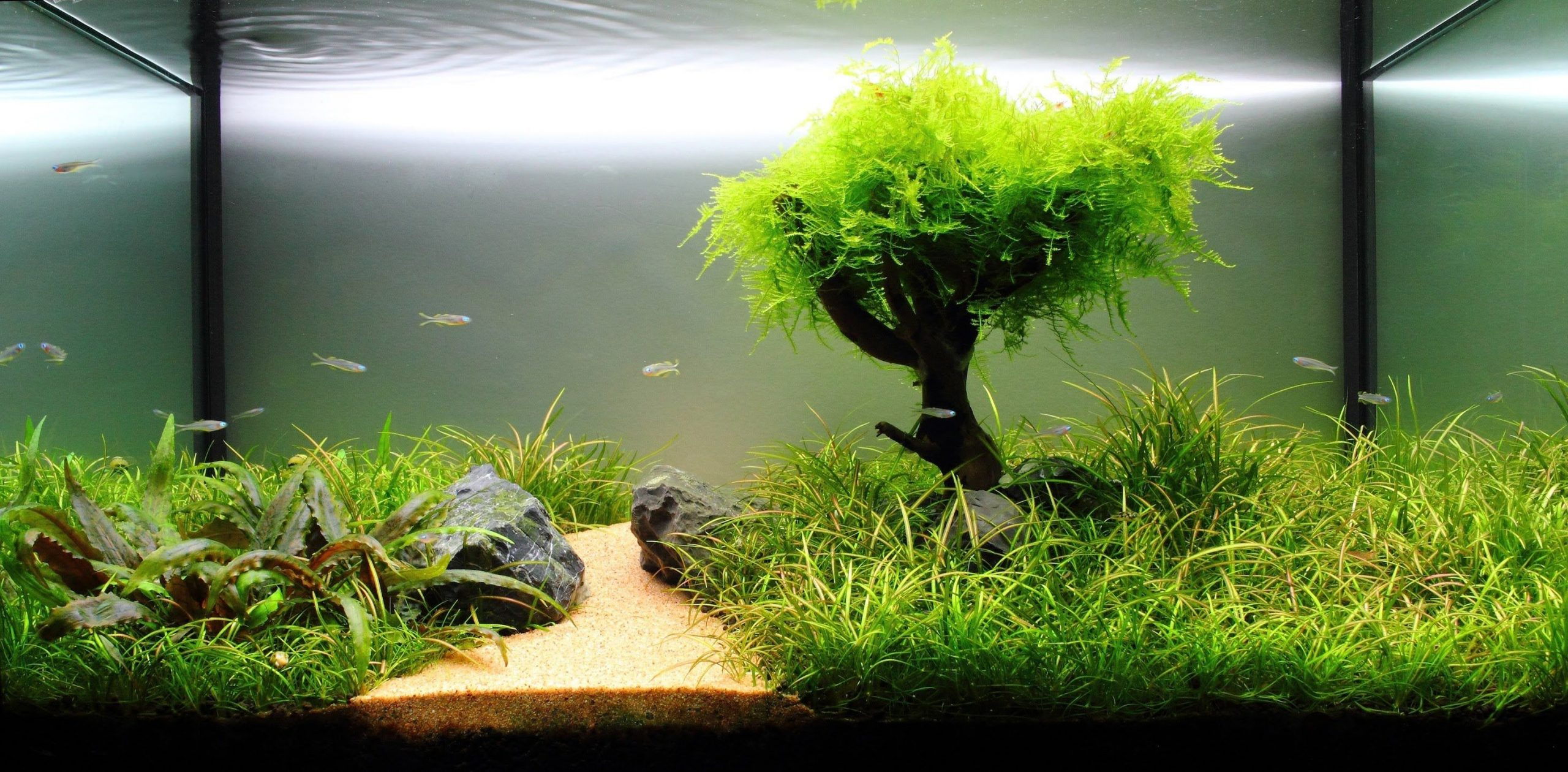 How to take care of plants in the aquarium?